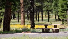 White Horse Lake Campground, Williams Ranger District