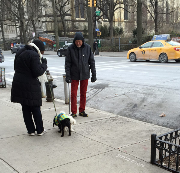 Dog Meeting NYC