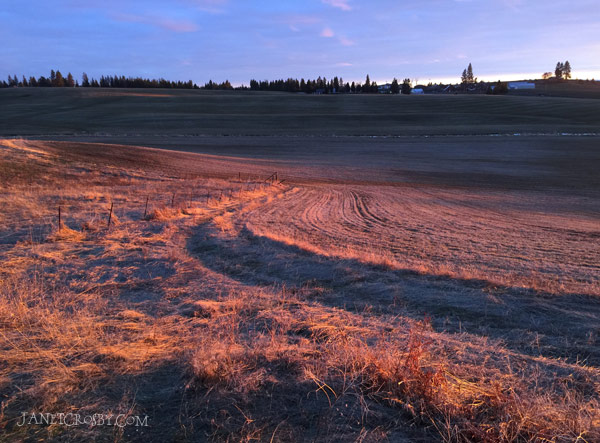 Winter Field by Janet Crosby