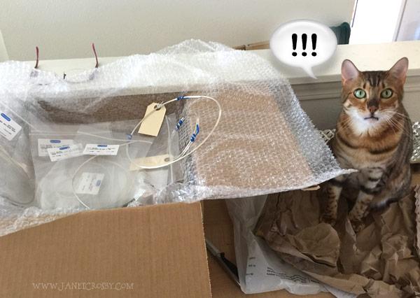 Studio Helper Wondering What Is Next