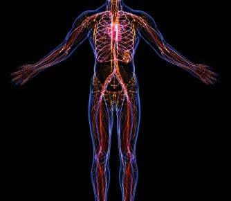 silouette of the lymph system in the body