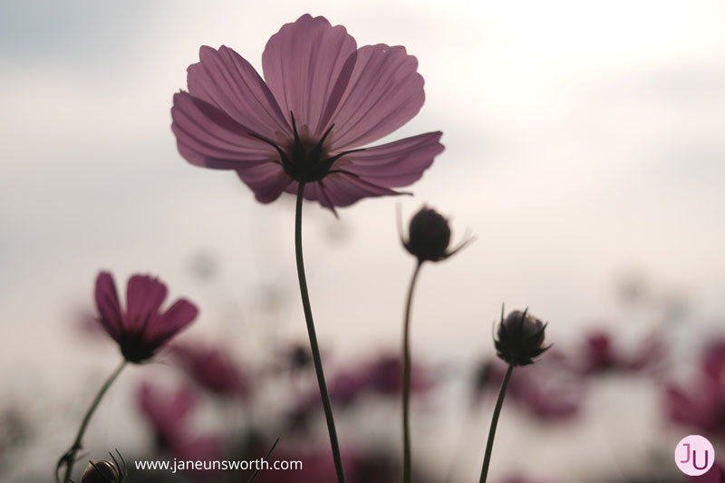 feeling better as return to normal health - Jane Unsworth - Body Image Coaching