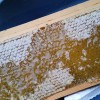 Honey on the comb