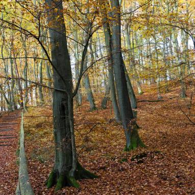 Nationalpark Wolin