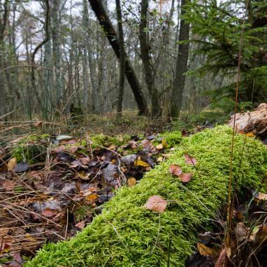 Weg zurück durch das Naturschutzgebiet