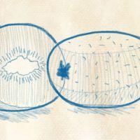Dinge zeichnen - Wie zeichnet man eine Kiwi