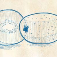 Eine Kiwi zeichnen - so gehts
