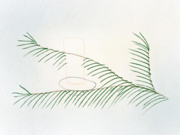 Nadelzweig zeichnen Tannenzweig – 08