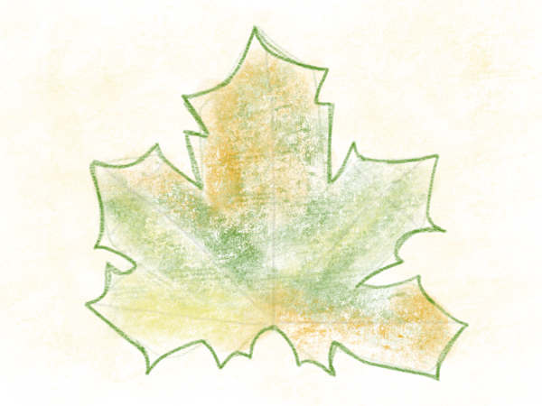 Kastanienblatt zeichnen – 12