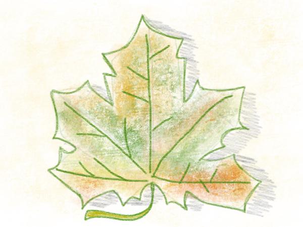 Kastanienblatt zeichnen – 15