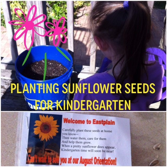 Planting Sunflower Seeds for Kindergarten