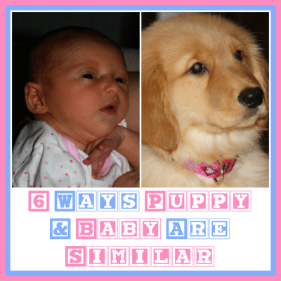 6 Ways Puppy & Baby Are Similar