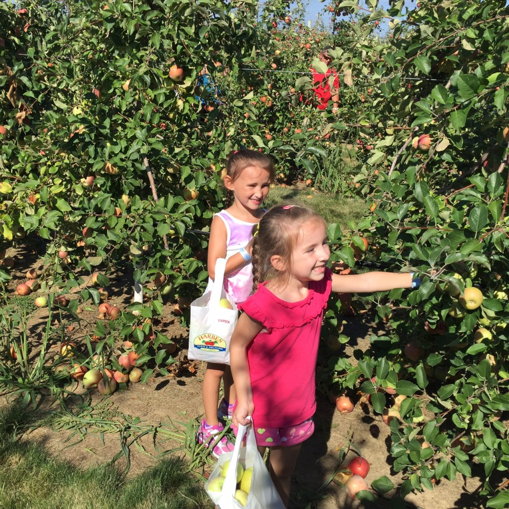 apple-picking