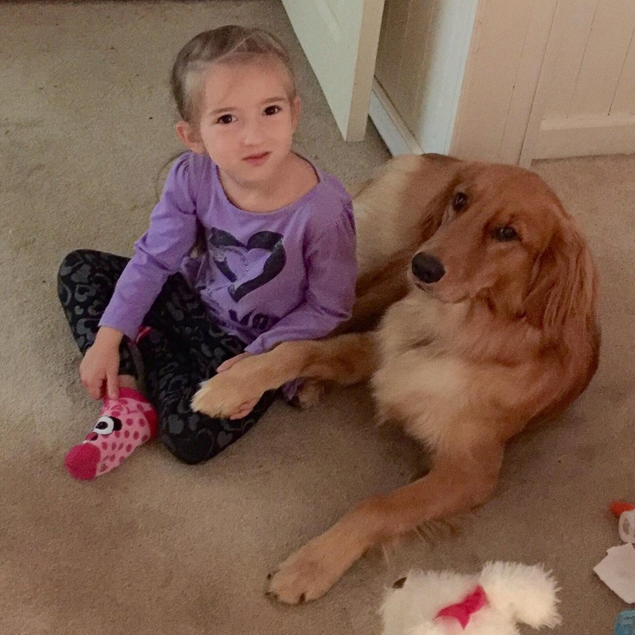 Playing-dog-golden-retriever
