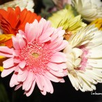 Why Fresh Flowers From BloomsyBox Are Must For You This Spring