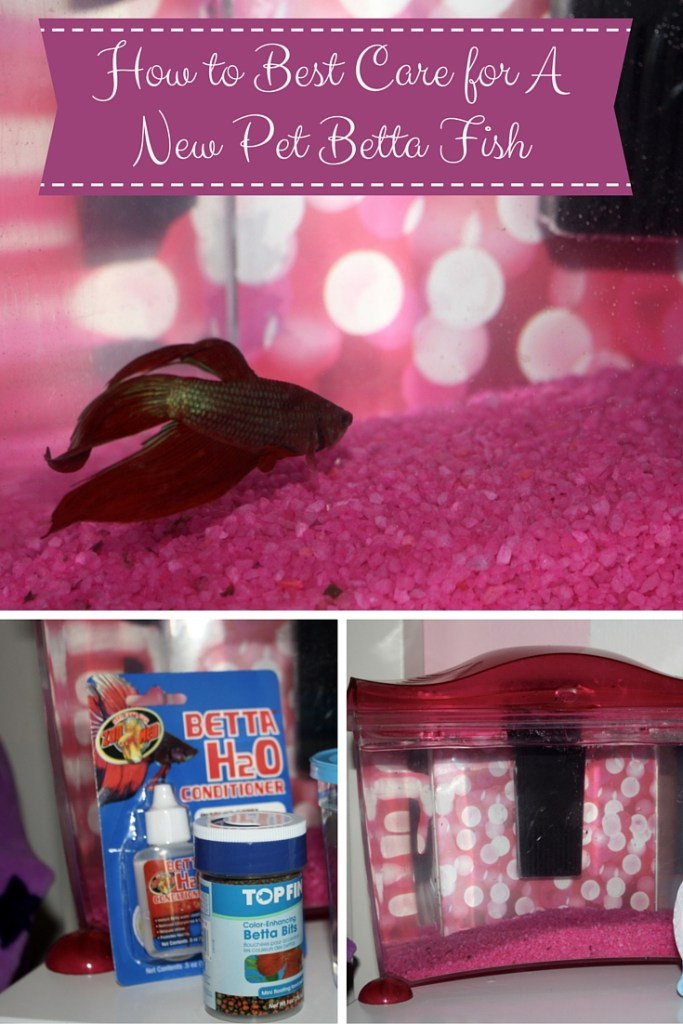 How to Best Care for A New Pet Betta Fish
