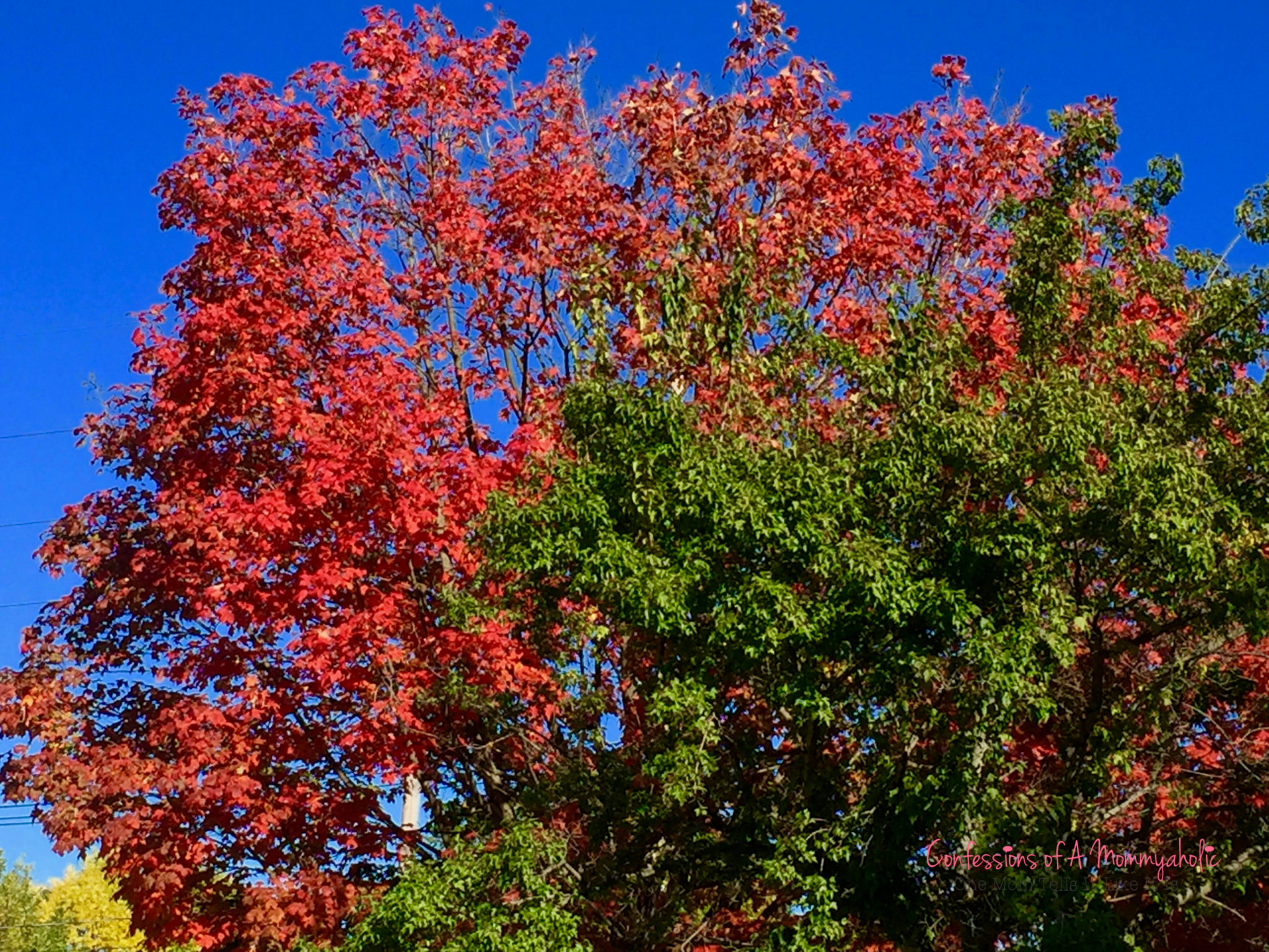 fall-leaves-trees-color