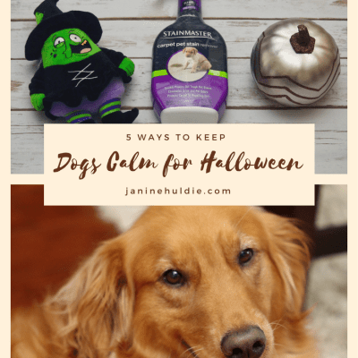 5 Ways to Keep Dogs Calm For Halloween