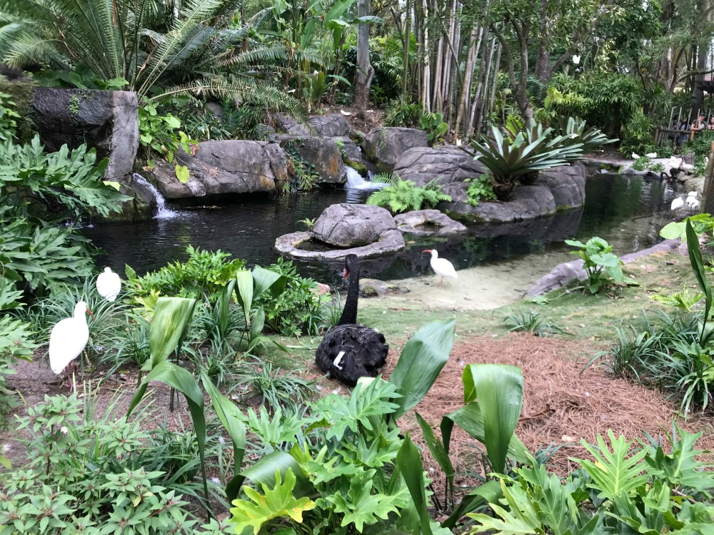 Kilimanjaro Safari Geese