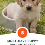 8 Must-Have Puppy Products for A New Dog Owner