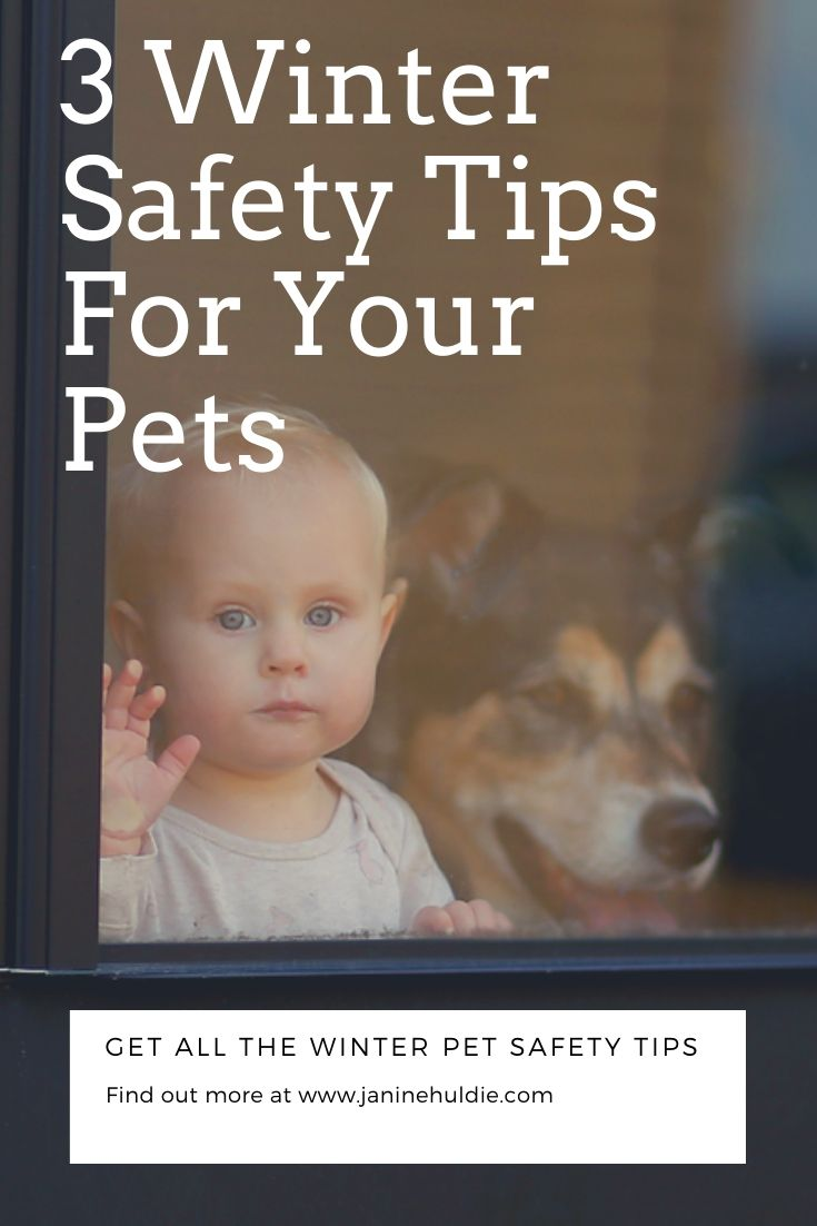 Safety Tips for Your Pets, This Mom's Confessions