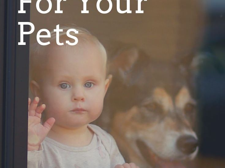 3 Winter Safety Tips For Your Pets