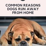 5 Common Reasons Dogs Run Away From Home