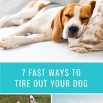 7 Fast Ways to Tire Out Your Dog