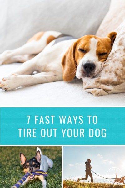Ways to Tire Out Your Dog