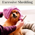 Methods to Reduce Excessive Shedding in Dogs
