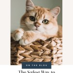 What Are the Safest Techniques to Restrain a Cat to Clip Its Nails?