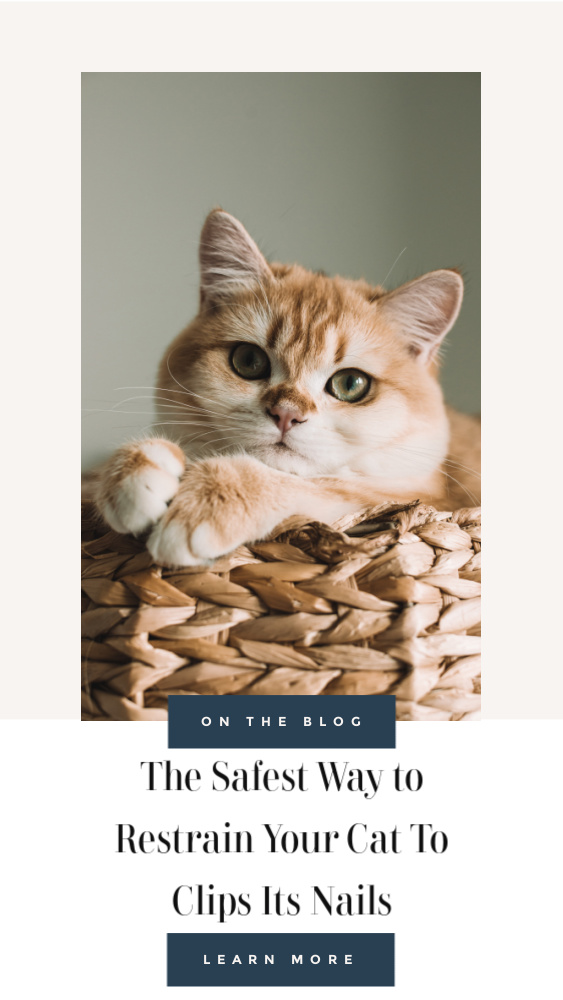 Tips to Clip Cats Nails