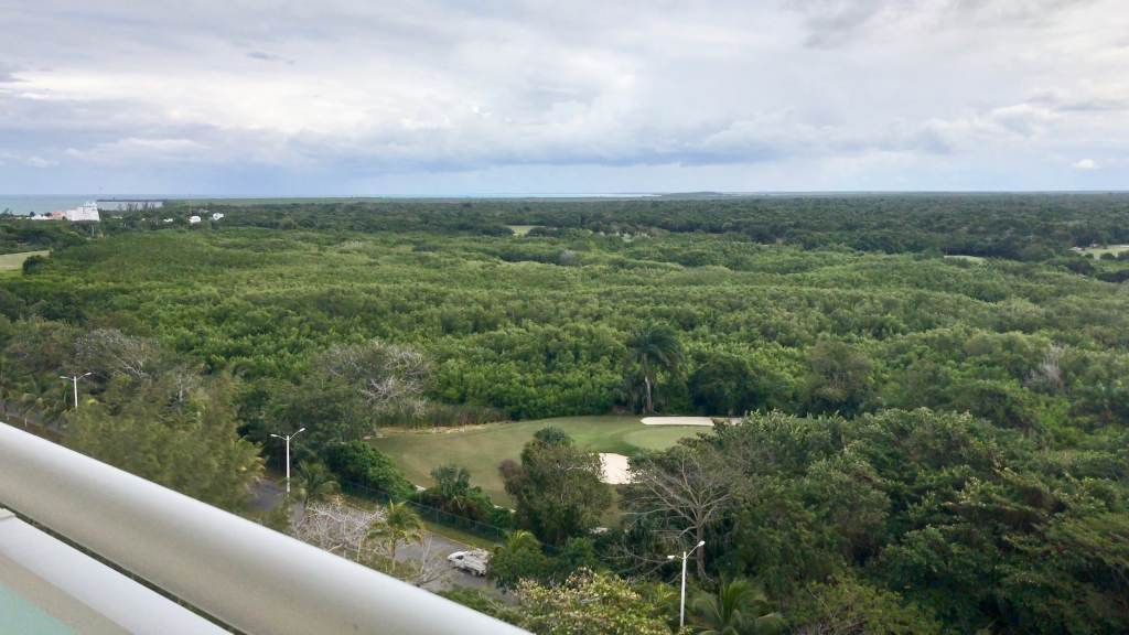 Jungle view from the Westin Cozumel