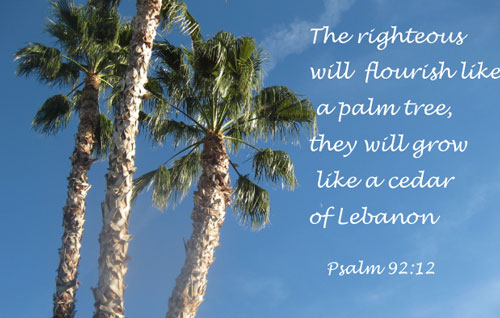 Psalm-91-12-Palm-Tree