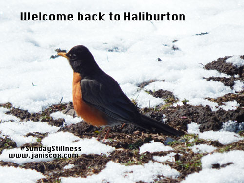 Welcome-back-to-Haliburton
