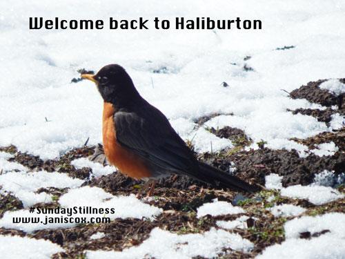 Welcome-back-to-Haliburton