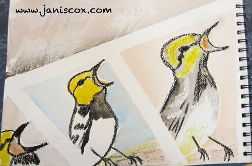 Week-30-Art-Course-Janis-Cox-bird-Watercolour-Experimental