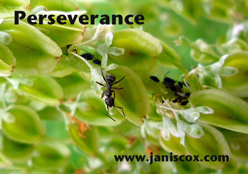 Ant - Perseverance