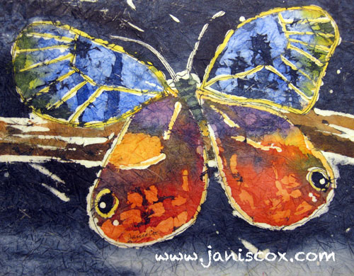 Butterfly by Janis Cox