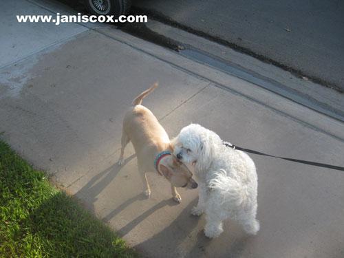 Snowball meets a friend