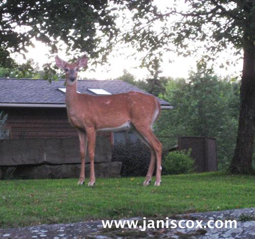 week-27,-28-deer-on-the-rock