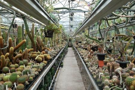 Botanischer Garten Zuidas Amsterdam