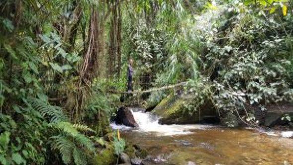 Valle de Cocora Colombia wandelen