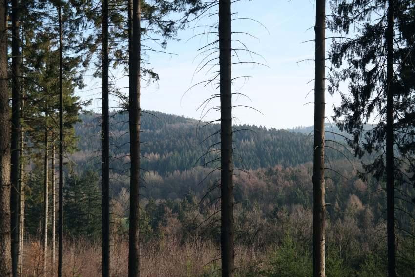 Runde von Georgsmarienhütte wandern