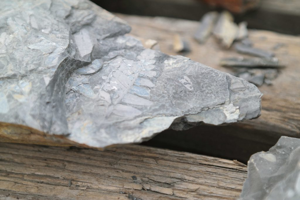 Fossielen bij Piesberg