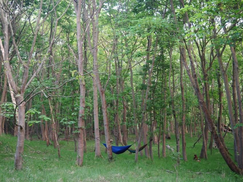 Buiten slapen in de hangmat in de natuur