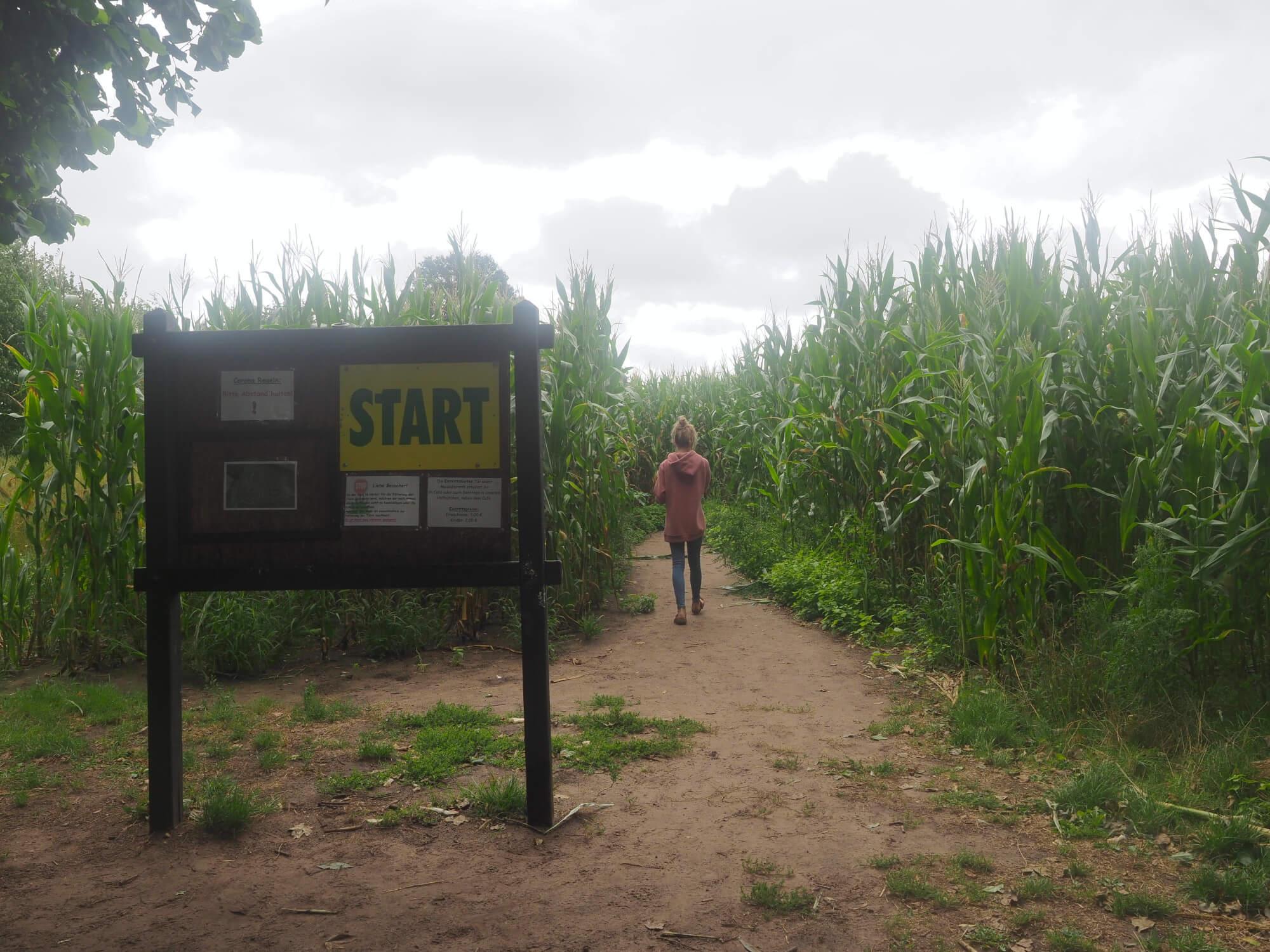 Maislabyrinth Meutstege im Emsland