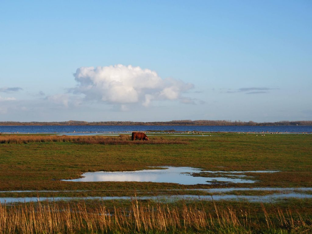 Lauwersmeer Schotse Hooglanders
