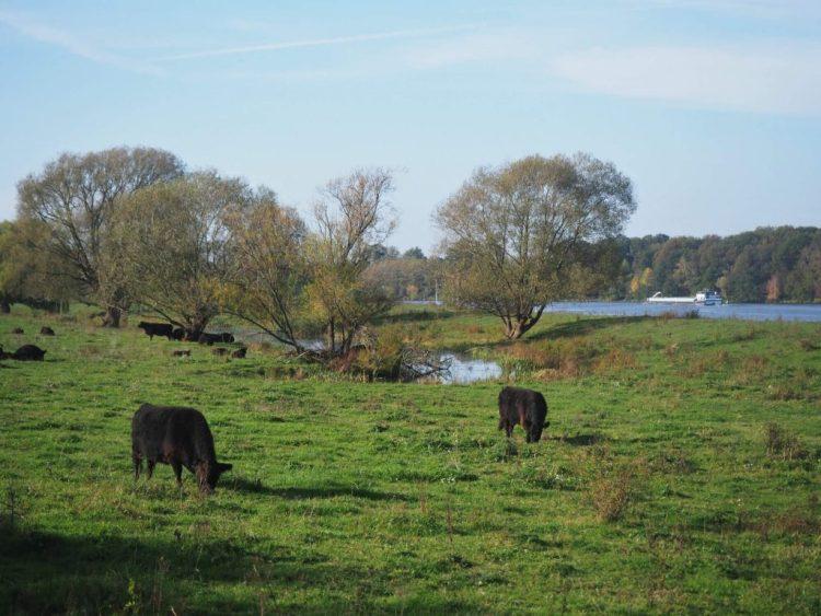 Wandelen Maas Limburg