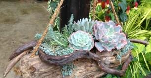 succulent_garden2